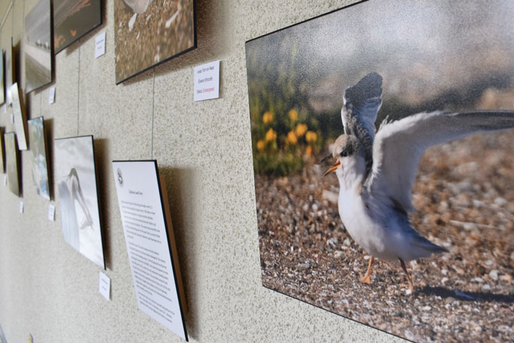 Golden Gate Audubon Society Centennial Exhibit