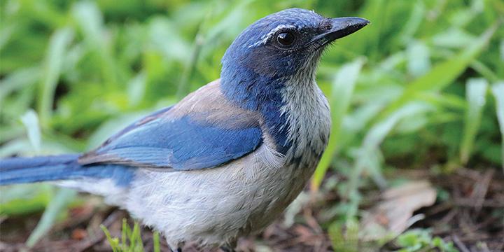 Presidio Discoveries Watch Live Webcam Of Raptor Nest