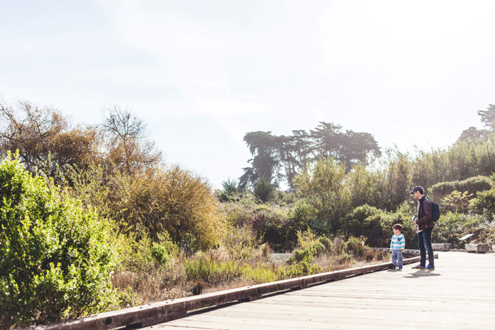 bird watching in the Presidio