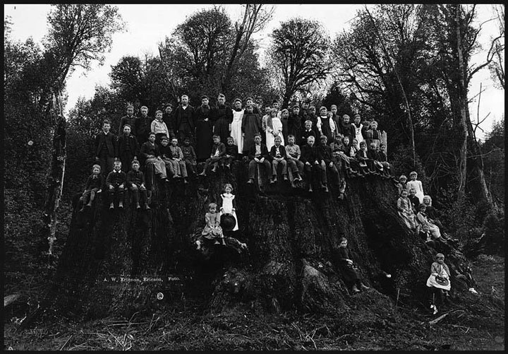 Fieldbrook stump in 1896