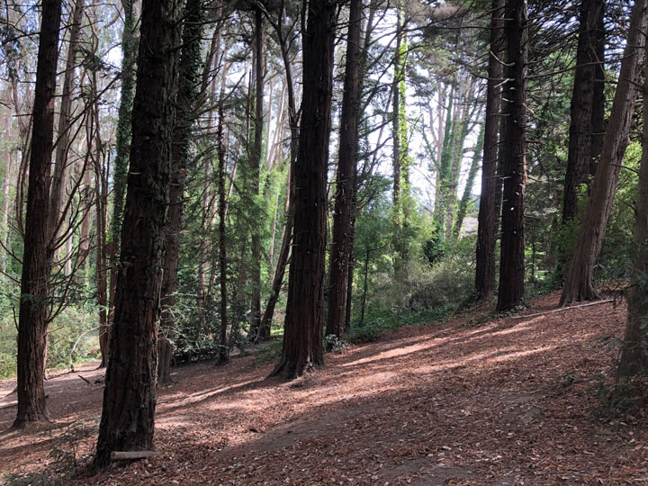 Ecology Trail in the Presidio