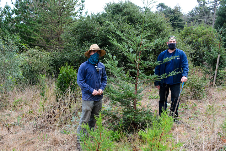 Presidio Forestry's Alex Roberts and Stephen Duffy in Thomas Grove
